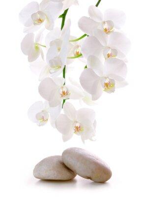 Adesivo Pedras da massagem com orquídea.
