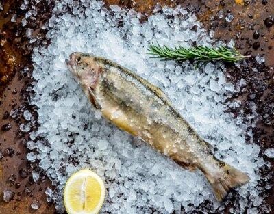 Adesivo peixe fresco