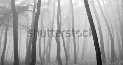 Adesivo Pinheiro visto através da névoa