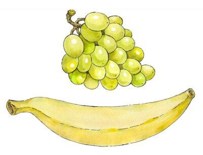 Adesivo Pintura da aguarela de um conjunto de frutas: uvas e bananas