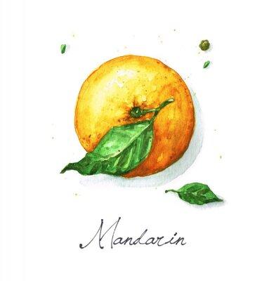 Adesivo Pintura do alimento da aguarela - mandarino ou laranja