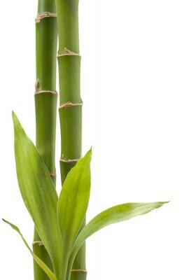 Adesivo Planta de bambu