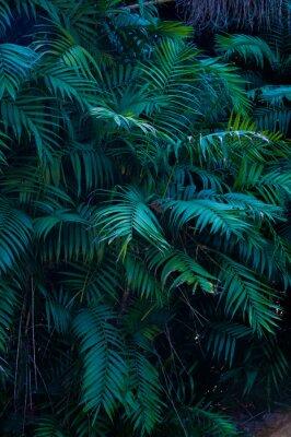 Adesivo Plante exotique