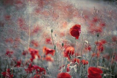 Adesivo Poppy in spring