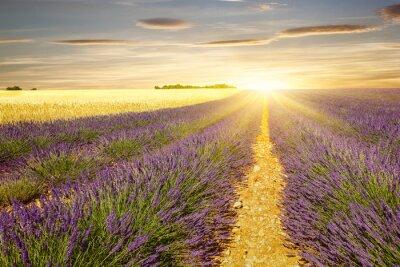 Adesivo Pôr do sol, alfazema, trigo, campos