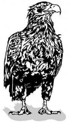Adesivo Pretas, branca, águia, esboçado, Ilustração, vetorial