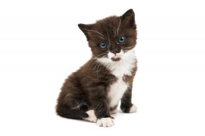 Adesivo Preto e branco gatinho isolado