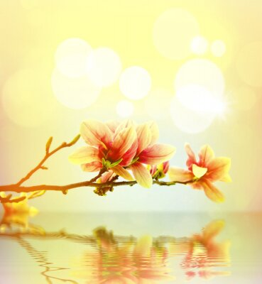 Adesivo Primavera magnólia flor fundo