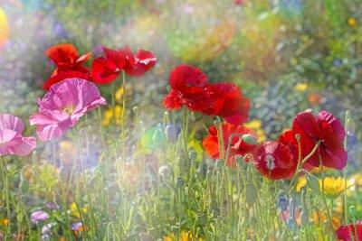 Adesivo Primavera, prado, vermelho, papoulas
