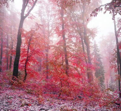 Adesivo Primeira neve no outono
