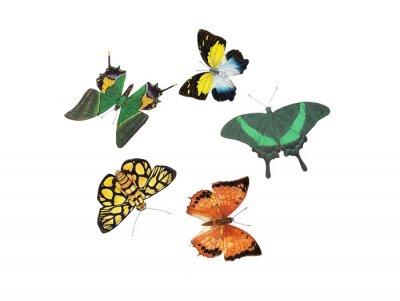 Adesivo projeto da borboleta