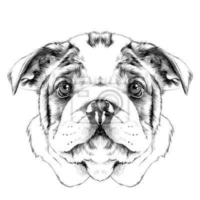 Raça De Cão Bulldog Americano Cabeça Esboço Vetorial Gráficos