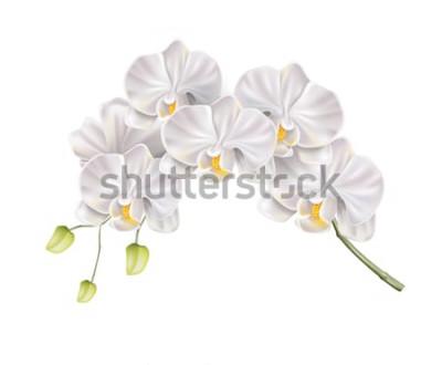 Adesivo Ramo branco realístico da flor da orquídea com os botões na haste. Convite elegante do casamento, projeto da decoração do salão de beleza dos termas. Cartão de convite de casamento de vetor, elemento