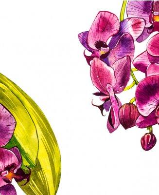 Adesivo Ramo de orquídea em aquarela, ilustração floral desenhada mão, isolada em um fundo branco. Ilustração em aquarela flora, pintura botânica, mão de desenho.