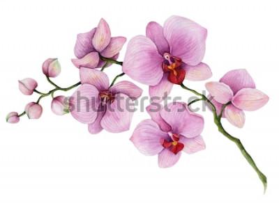 Adesivo Ramo de orquídea em aquarela, mão desenhada floral ilustração isolado em um fundo branco.