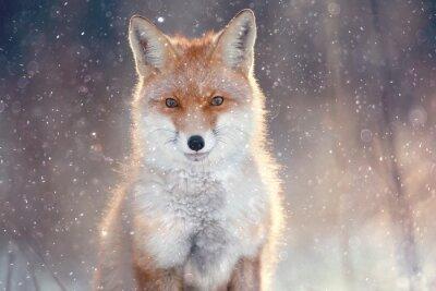 Adesivo Raposa vermelha na floresta do inverno