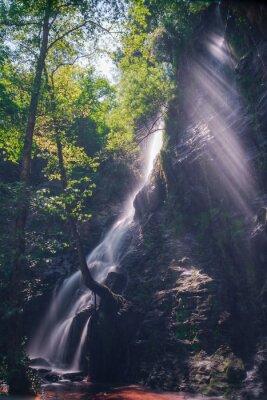 Adesivo Rayos de sol através das folhas do bosque na cascata de Hortas, Galiza