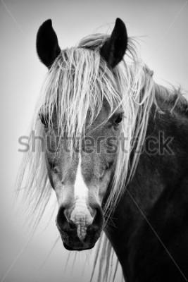 Adesivo Retrato de cavalo preto e branco
