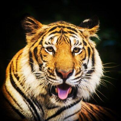 Adesivo Retrato do tigre de um tigre de bengal.