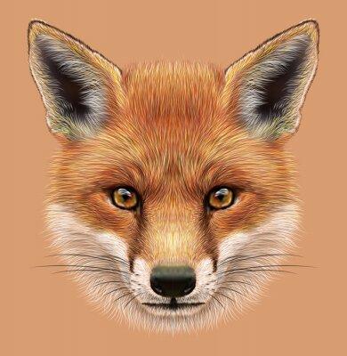 Adesivo Retrato ilustrativo de um Fox vermelho. O rosto macio fofo da floresta Fox.
