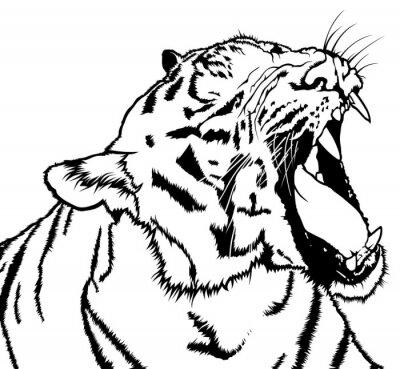 Adesivo Roaring Tiger - Preto e Branco Drawing Ilustração, Vector