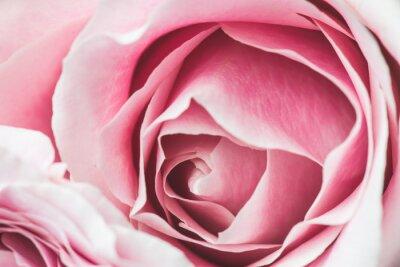 Adesivo Rosa, rosÈ, flor, shallow, profundidade, campo, foco, centro, rosÈ, flor