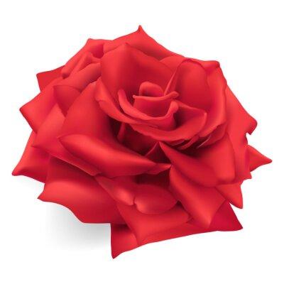Adesivo Rosa vermelha. Mão desenhada ilustração do vetor de uma rosa vermelha, a rainha das rosas, símbolo de amor, coragem, compaixão.