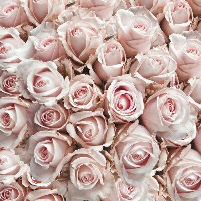 Adesivo Rosa vintage rosas