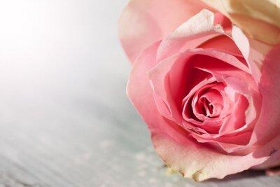 Adesivo Rosas Ainda vida