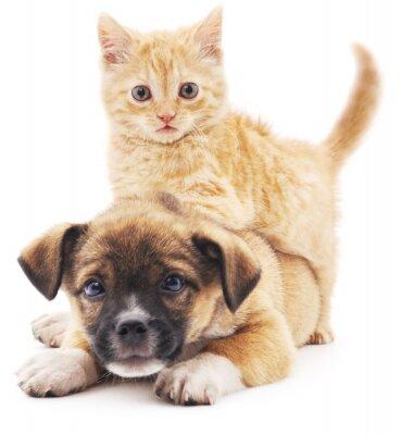 Adesivo Rred gatinho no filhote de cachorro.