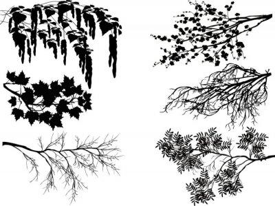Adesivo Seis ramos de árvore da mola no branco