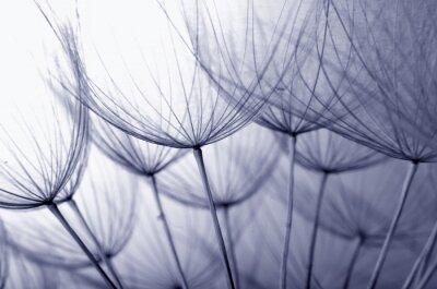 Adesivo sementes de dente de leão