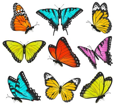Adesivo Set of colorful butterflies illustration