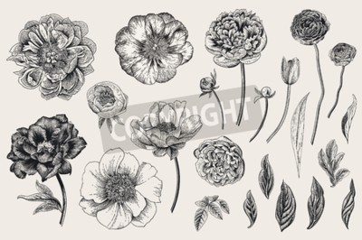 Adesivo Set of Spring flowers. Vintage vector botanical illustration. Black and white