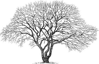 Adesivo silhueta da velha árvore