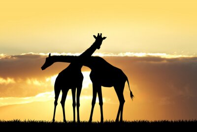 Adesivo Silhueta do girafa no por do sol