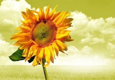 Adesivo słonecznik