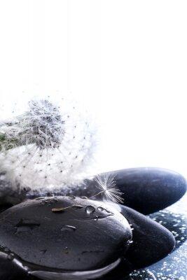 Adesivo Soffione con seme