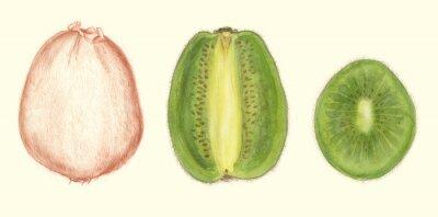Adesivo Studi di Frutta: kiwi