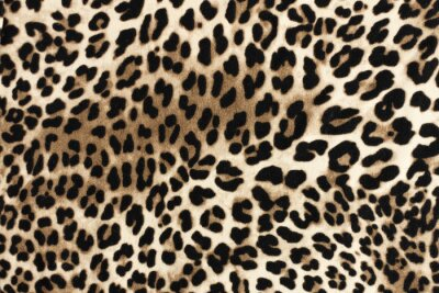 Adesivo Textura de leopardo fablic. Fundo de moda têxtil.