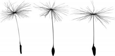 Adesivo three black dandelion seeds silhouette isolated on white