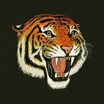 Adesivo tiger roar drawing