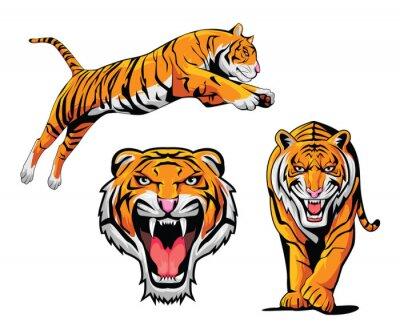 Adesivo Tiger Set Ilustração