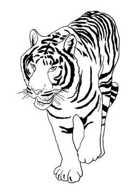 Adesivo Tigre branco