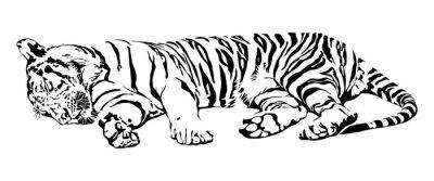 Adesivo Tigre do sono.