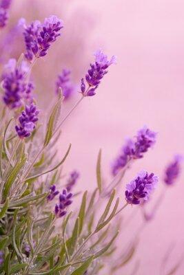 Adesivo Tons de violeta