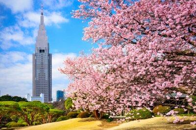 Adesivo Tóquio, Japão, em Shinjuku Gyoen Park, na Primavera