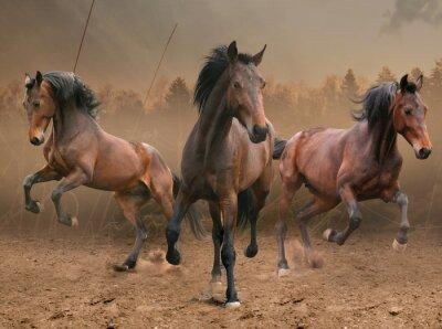 Adesivo três cavalos