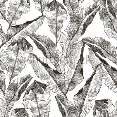 Adesivo Tropic plants floral seamless jungle pattern. Print vector background of fashion summer wallpaper palm banana leaves in black and white gray style