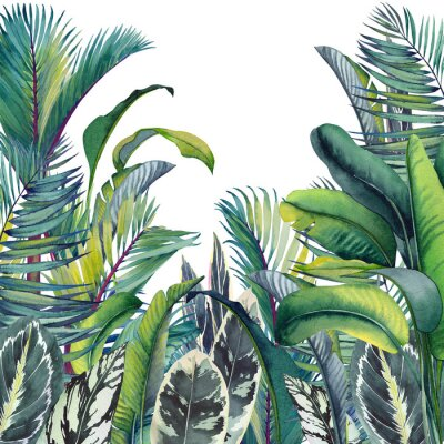 Adesivo Tropical card with palm trees, banana and calathea leaves. Watercolor illustration on white background.